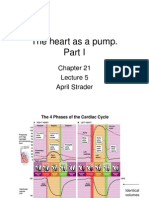 Lecture 5 - The Heart as a Pump
