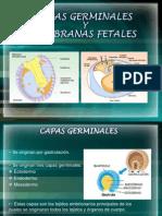 CAPAS GERMINALES
