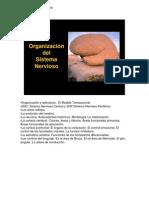 El Sistema Nervioso Para Bachillerato