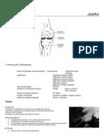 APOSTILA - Cinesioterapia - Mobilização Articular Joelho e Perna