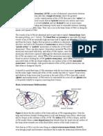 An Arteriovenous Malformation