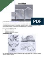 02. Osteologia Anatomia