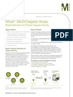 Muse™ MultiCaspase Assay Technical Brief