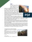 Incendios Forestales Ecuador