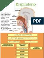 2.- aparato respiratorio