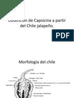 Obtención de Capsaicina a partir del Chile jalapeño