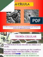 Celula_procarionte1