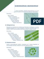 Algas sistematica