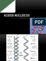 Exercício ÁCIDOS NUCLEÍCOS - CONT. AULA 1