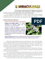Trei Plante Contra Vlaguielii de Primavara Ori Toamna