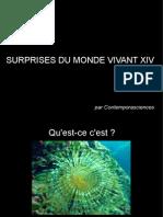 Surprises Du Monde Vivant XIV