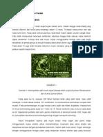 Kibod Dan Sejarah Kibod