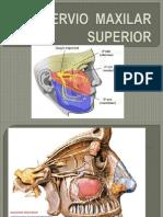 Nervio Maxilar Superior Ak