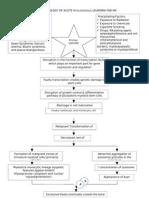 Pathophysiology of Acute Myelogenous Leukemia Fab m4