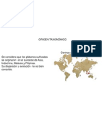 platanito3