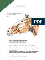 resumo_Sistema_Digestório