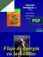 Capítulo 6-El flujo de energía en la vida de una célula