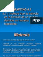 4.2 Meiosis