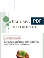 Padurea de Conifere Copy