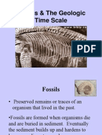 Fossils Geo Time