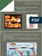 Importancia de Las Eubacterias