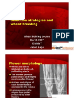 Wheat Breeding.