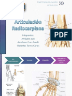 Articulación Radiocarpiana