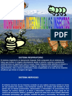 Morfologia Interna de Insectos