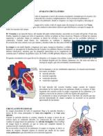 anatomia comparada Aparato Circulatorio