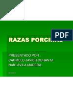 razasporcinas-091109183732-phpapp01