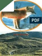 Bioma de Tundra y Taiga de Dora , Maryi y Danny