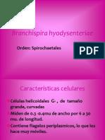 Branchispira hyodysenteriae (1)
