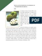 informe CHIRIMOYA AUTOESTABLE