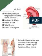 Lien Anatomi