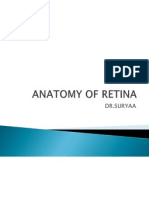 Anatomy of Retina