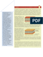 Actividade de inquérito - Modelo da membrana celular