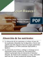 Absorcion de Los Nutrientes
