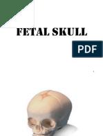 A&P- fetal skull
