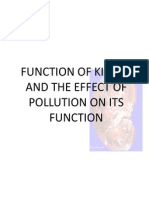 Function of Kidney and the Effect of Pollution
