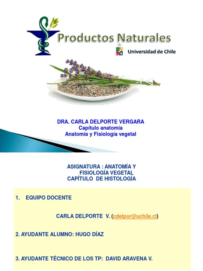 Clase 4 Anatomia Vegetal