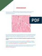 SISTEMA MUSCULAR - Investigacion Formativa