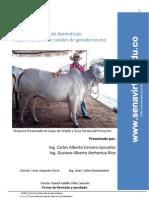 Desposte y corte de canales de ganado bovino