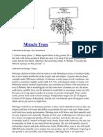 How to Plant and Grow Moringa