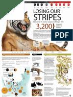 World Tiger Poster Size June 6