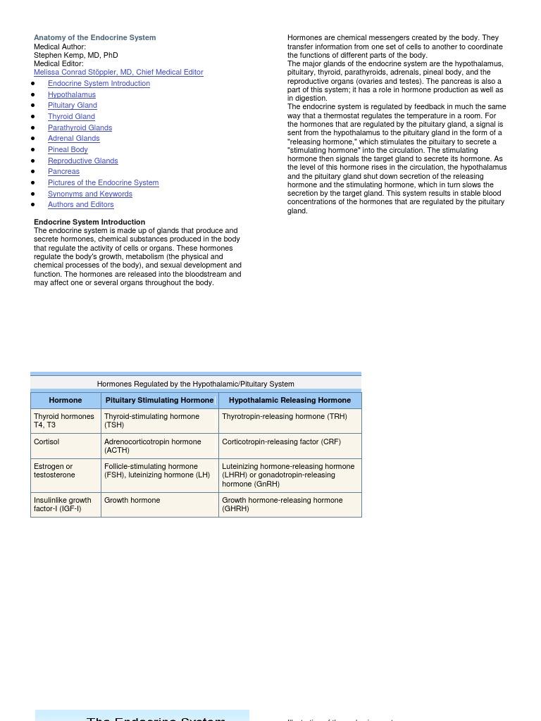 Anatomy Of The Endocrine System Endocrine System Hormone