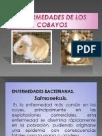 Principales Enfermedades de Los Cuyes