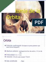 Anatomía de la òrbita.