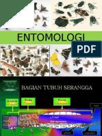 materi entomologi
