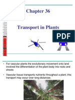 113-Transport in Plants Chapter 36