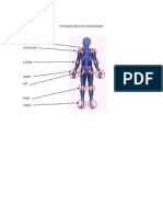The Main Joints of Human Body